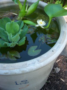 red wing crock water garden