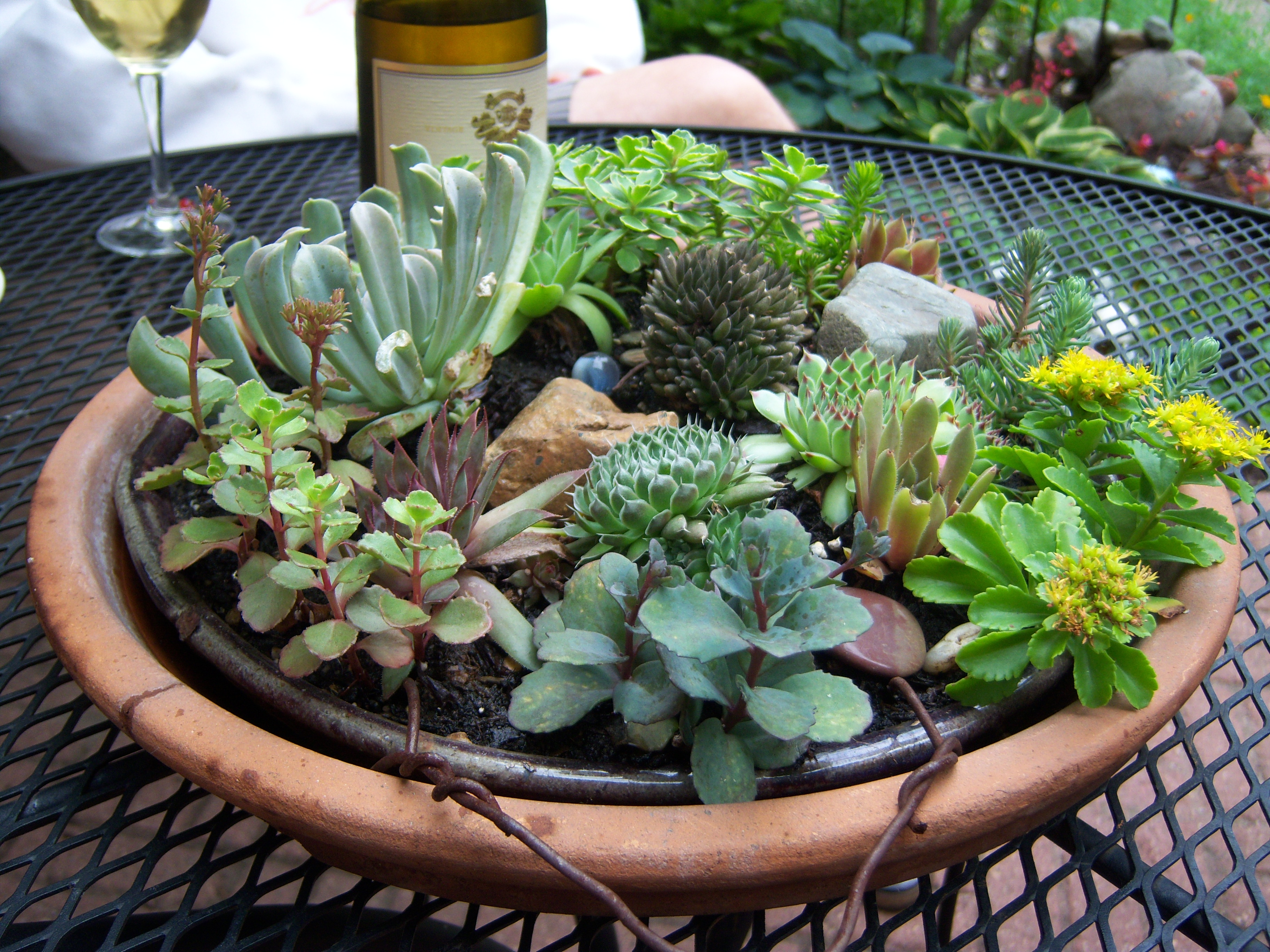 Succulents are succulent they make me happy garden drama for Decoration jardin cactus
