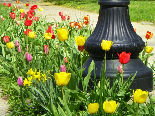 Overdosing on tulips on the boulevard is a welcome practice. It makes the neighbors love you