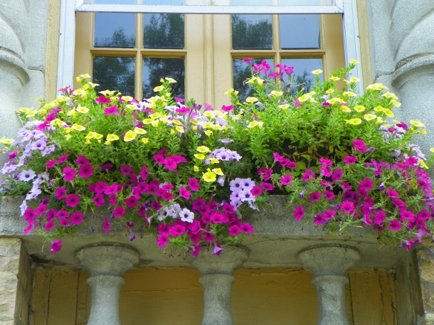 A window box of petunias is grand. Window boxes will make any place a garden home.