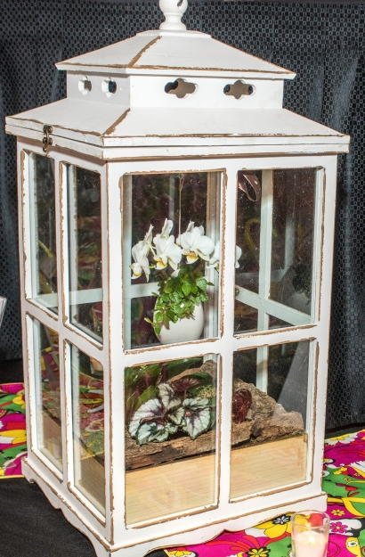 photo credit Mike Krivit, conservatory terrarium planted in a single plastic dish with craft boards and bark to conceal.